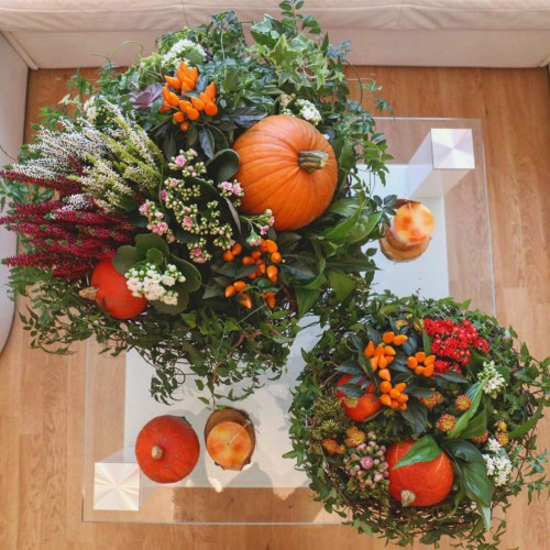 Autumn decorations with live plants and pumpkins